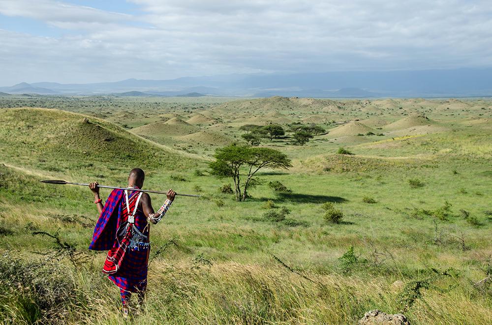 Maasai warrior walking through the plains, Tanzania by Arista